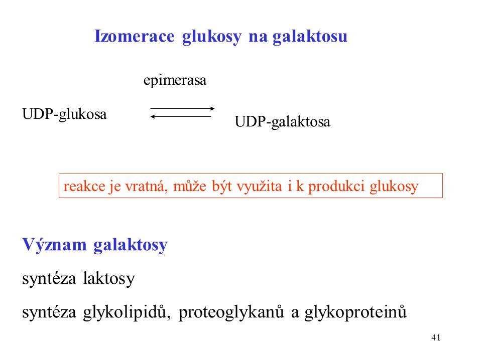41 UDP-glukosa UDP-galaktosa epimerasa reakce je vratná, může být využita i k produkci glukosy Izomerace glukosy na galaktosu Význam galaktosy syntéza
