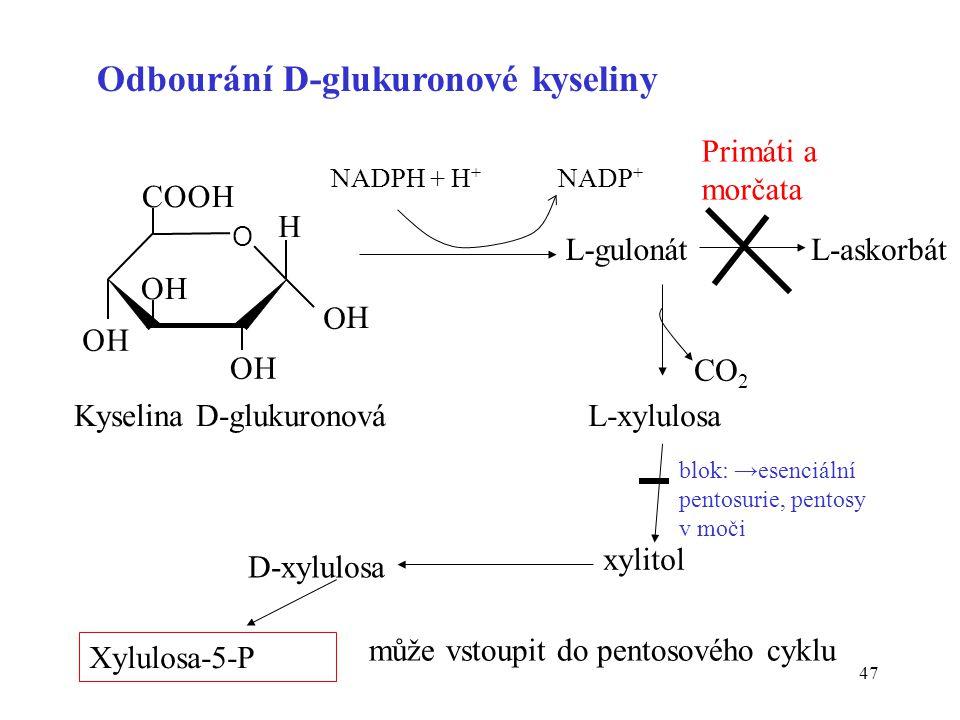 47 OH O OH COOH OH O H H L-gulonát NADPH + H + NADP + L-xylulosa xylitol D-xylulosa Xylulosa-5-P L-askorbát Primáti a morčata může vstoupit do pentoso