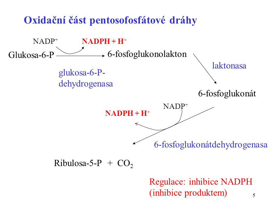 5 Oxidační část pentosofosfátové dráhy laktonasa 6-fosfoglukonátdehydrogenasa Glukosa-6-P NADP + NADPH + H + 6-fosfoglukonolakton NADP + NADPH + H + R