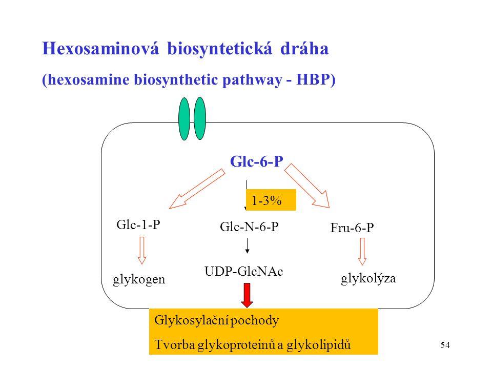 54 Hexosaminová biosyntetická dráha (hexosamine biosynthetic pathway - HBP) Glc-6-P Glc-1-P glykogen Fru-6-P glykolýza Glc-N-6-P 1-3% UDP-GlcNAc Glyko