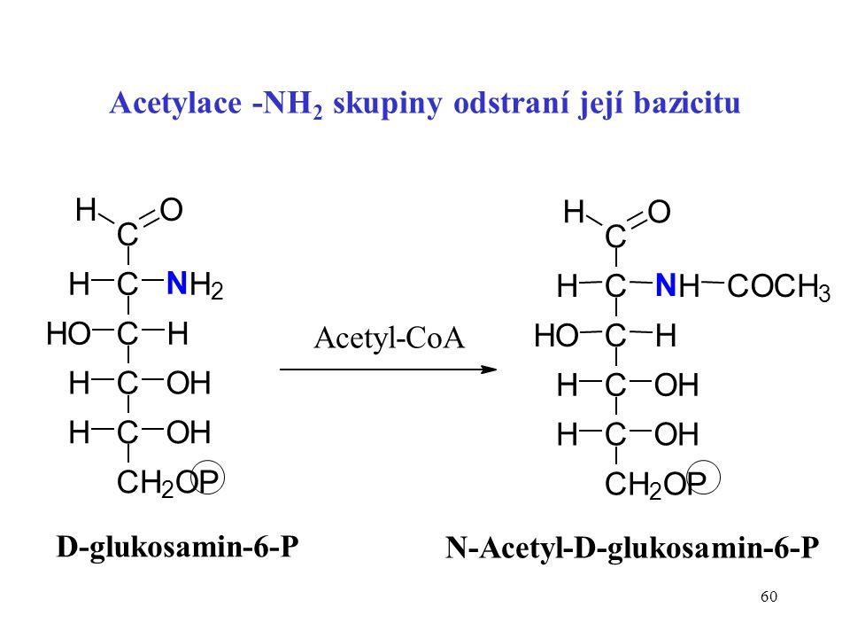 60 Acetylace -NH 2 skupiny odstraní její bazicitu C C C C HOH C OHH CH 2 OP OHH H N H 2 OH D-glukosamin-6-P C C C C HOH C OHH CH 2 OP OHH H N H OH COC
