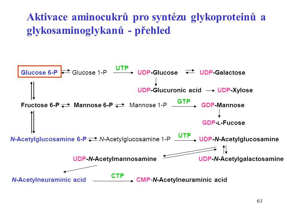 63 Aktivace aminocukrů pro syntézu glykoproteinů a glykosaminoglykanů - přehled Glucose 6-P Glucose 1-P UDP-Glucose UDP-Galactose UDP-Glucuronic acid