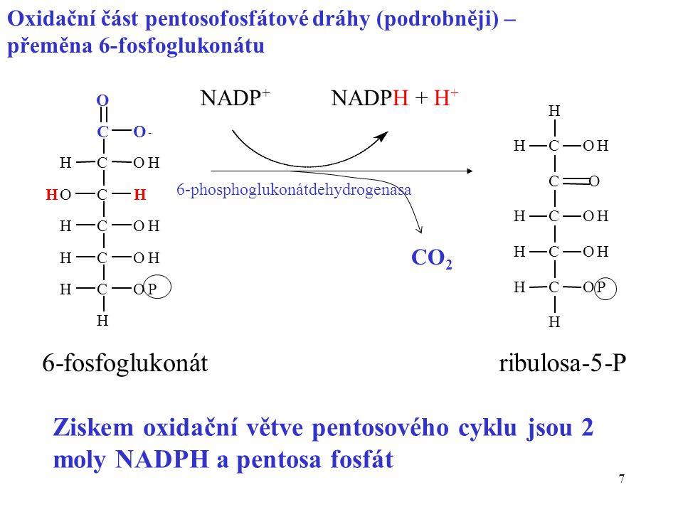 7 C O O - C C C C C OH H OH OH OP H HO H H H H H C C C C C OH OH OH OP H H H H H O NADP + NADPH + H + CO 2 6-fosfoglukonátribulosa-5-P Ziskem oxidační