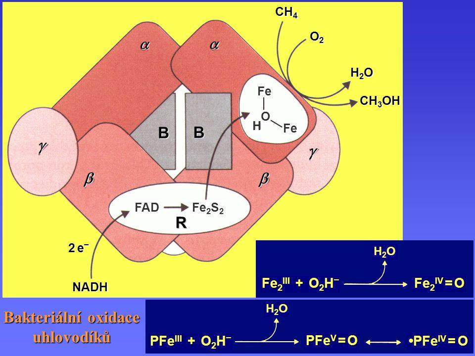 Bakteriální oxidace uhlovodíků Bakteriální oxidace uhlovodíků 2 e–2 e–2 e–2 e– NADH CH 4 CH 3 OH O2O2O2O2 H2OH2OH2OH2O Fe 2 S 2 FAD R Fe O H B B   