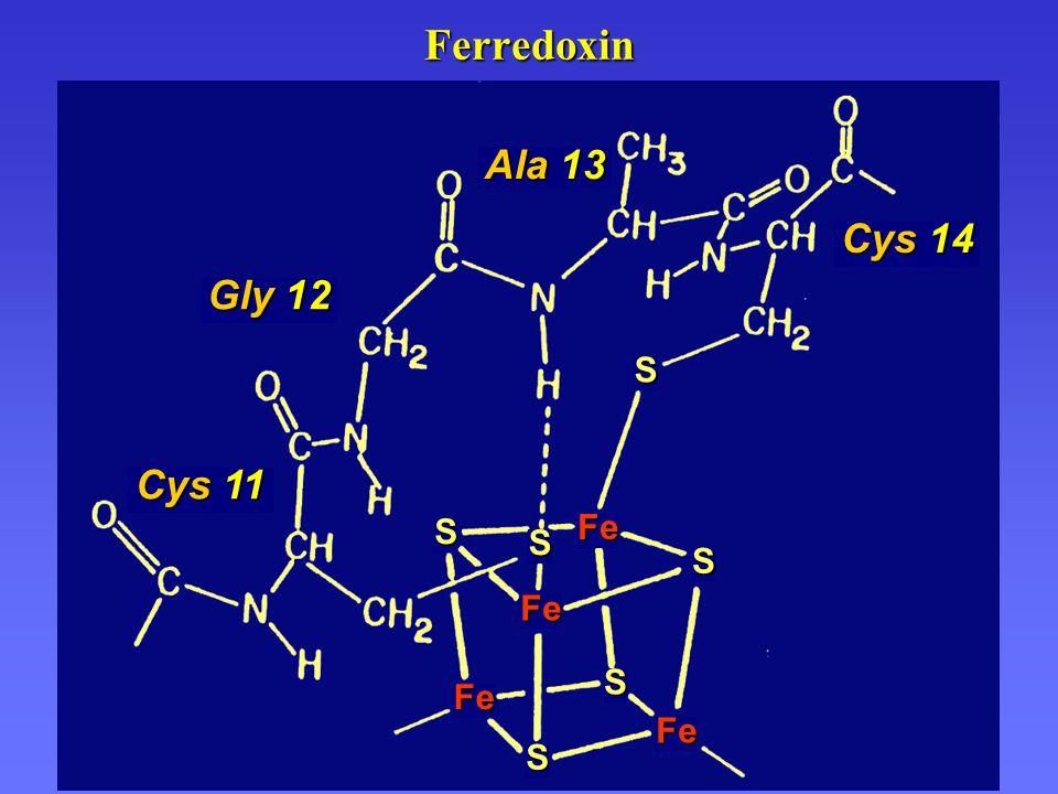 Ferredoxin Fe Gly 12 Fe Fe Fe Cys 11 Cys 14 Ala 13 S S S S S S