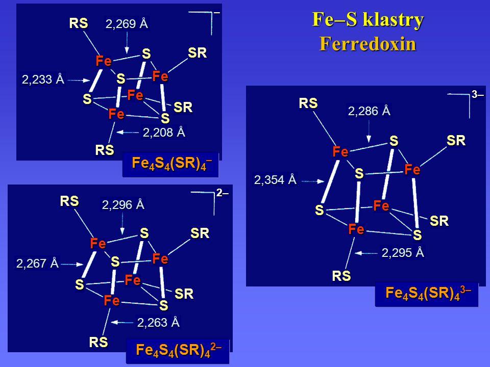 Obecné schema mechanismu isomerázy závislé na adenosyl-kobaltaminu