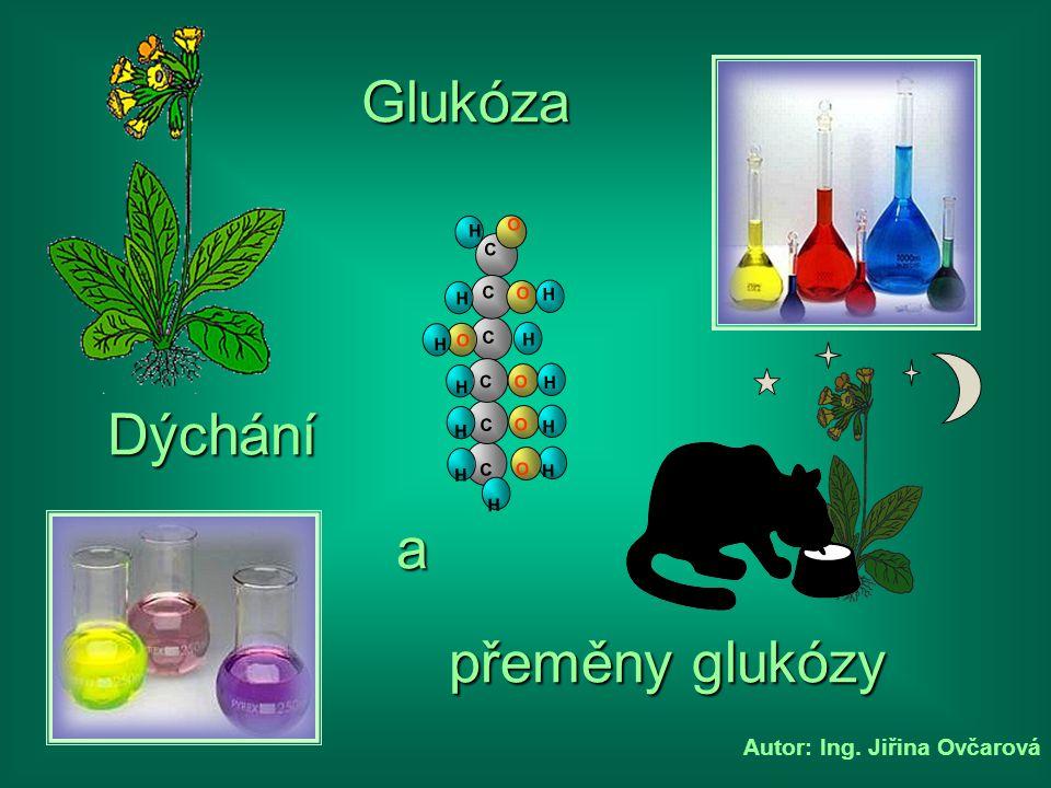 Autor: Ing. Jiřina Ovčarová Dýchání přeměny glukózy C C H H H C O H H O C H O H C O H H C O H H O H Glukóza a