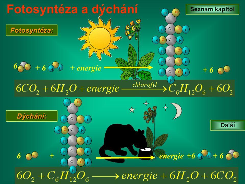 Seznam kapitol Další Fotosyntéza a dýchání C O O H O H 6 + 6 O O Fotosyntéza: Dýchání: C C HH H C O HH O C H O H C O HH C O HH O H + O O 6 C O O H O H