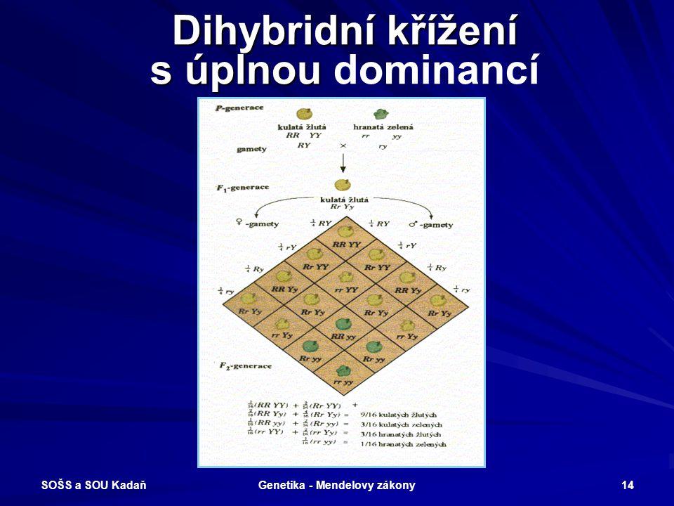 SOŠS a SOU Kadaň Genetika - Mendelovy zákony 13 Zákon o volné kombinovatelnosti vloh Při vzájemném křížení heterozygotů (F3 generace) ve více genových