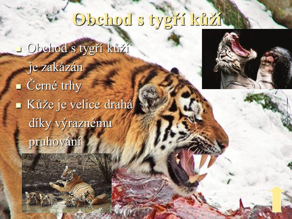 Tygří rezervace  Nacházejí se po celém světě  Především v Asii  Mezi nejznámější patří tygří chrám Kanchanburi s buddhistickými mnichy
