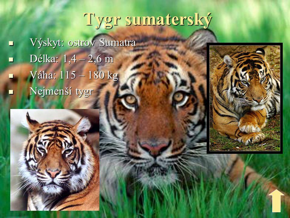 Tygr šavlozubý  Výskyt: Evropa, Asie, Afrika, s.Amerika  Žil před 13.