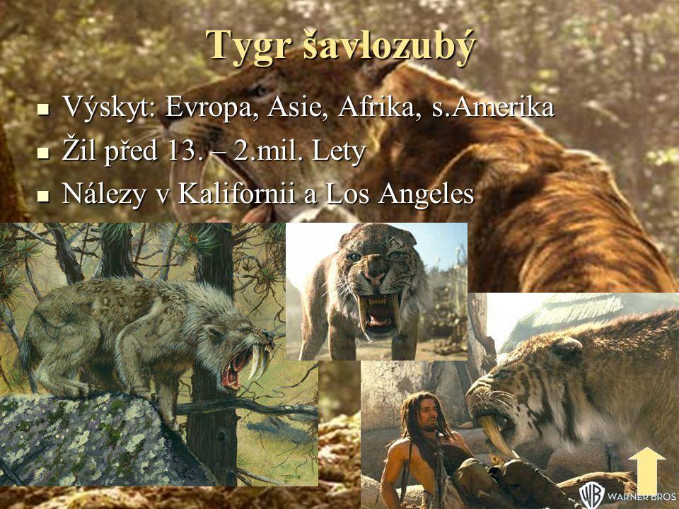 Charakteristika tygrů Druh Délka: m Váha: kg VýskytpočetBengálský 3 – 4 100 - 300 Indie… 2000 - 4000 Ussurijský 2 – 3,3 100 - 300 v.Rusko 200 - 300 Sumaterský 1,4 – 2,6 115 - 180 Ostrov Sumatra 400 - 500
