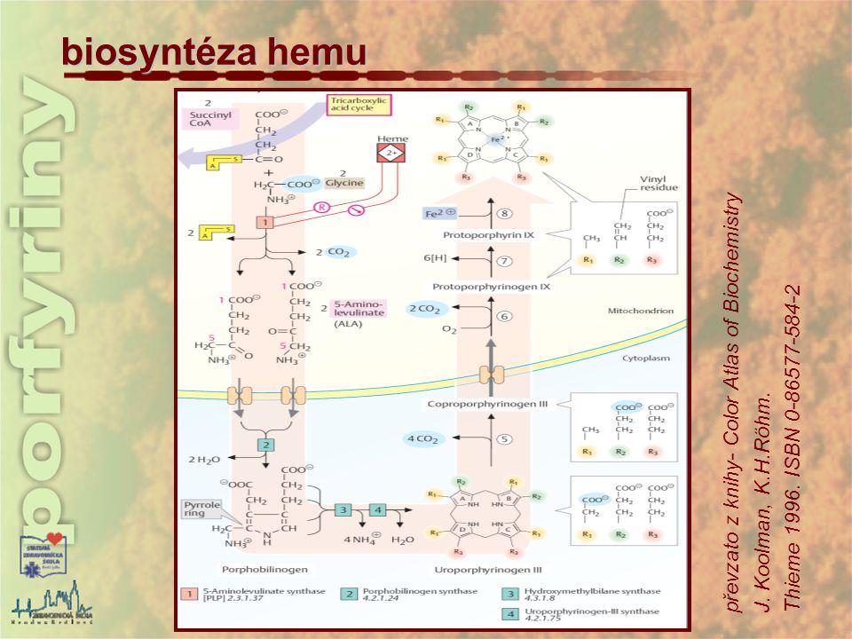 biosyntéza hemu převzato z knihy- Color Atlas of Biochemistry J. Koolman, K.H.Röhm. Thieme 1996. ISBN 0-86577-584-2