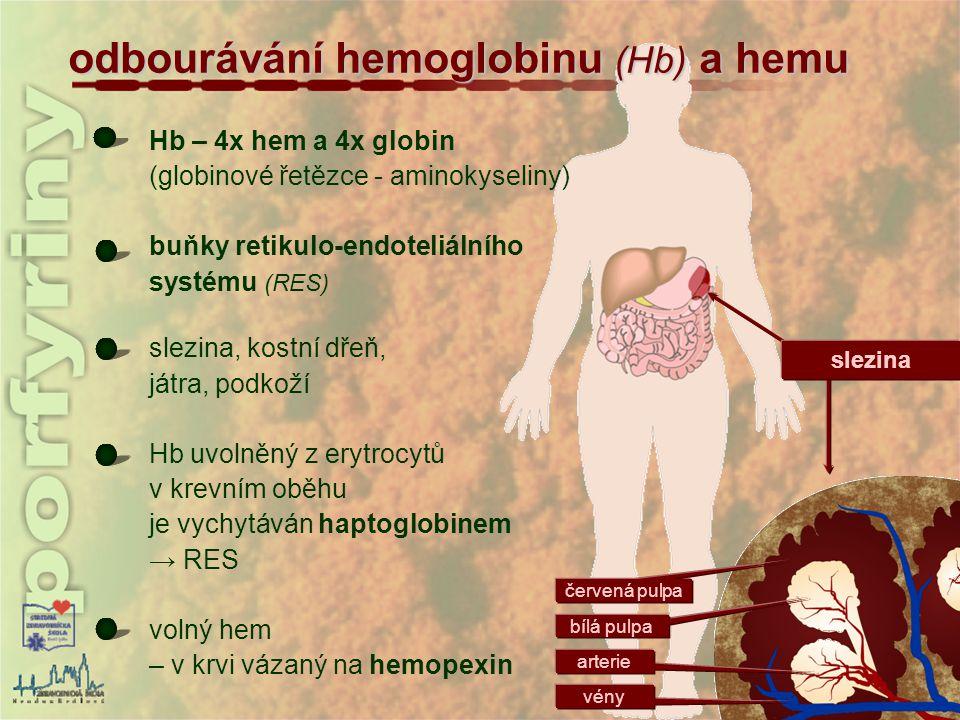 odbourávání hemoglobinu (Hb) a hemu Hb – 4x hem a 4x globin (globinové řetězce - aminokyseliny) buňky retikulo-endoteliálního systému (RES) slezina, k