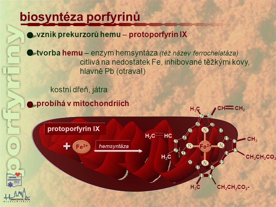 vznik prekurzorů hemu – protoporfyrin IX tvorba hemu – enzym hemsyntáza (též název ferrochelatáza) citlivá na nedostatek Fe, inhibované těžkými kovy,
