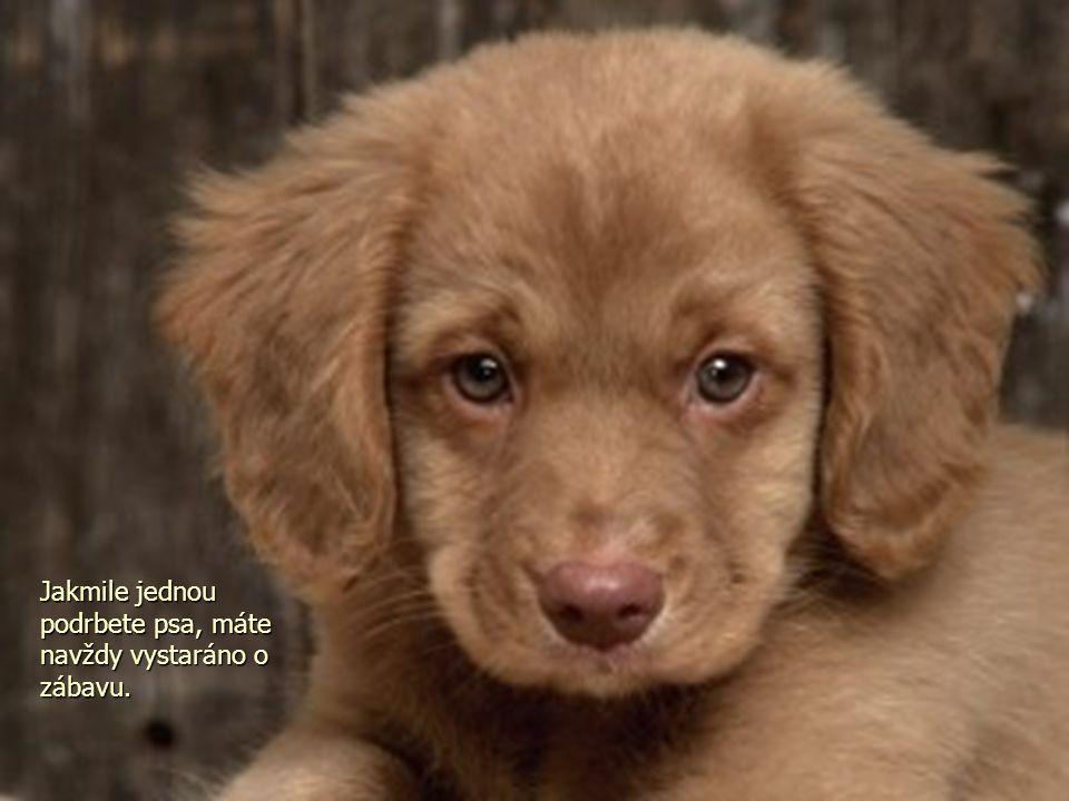 Jakmile jednou podrbete psa, máte navždy vystaráno o zábavu.