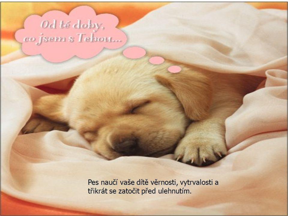 Pes naučí vaše dítě věrnosti, vytrvalosti a třikrát se zatočit před ulehnutím.