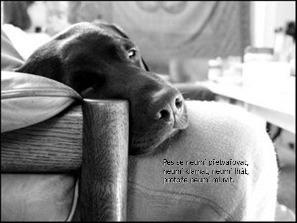Je celkem velice snadné psu rozumět a naučit se číst jeho myšlenky.