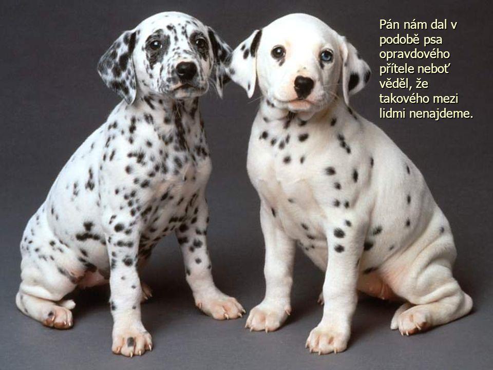 Pán nám dal v podobě psa opravdového přítele neboť věděl, že takového mezi lidmi nenajdeme.