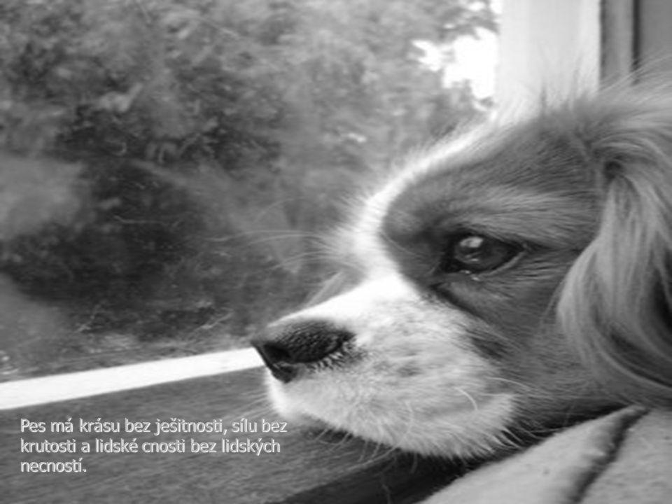 Kdo měl někdy psa, bude na něj vzpomínat asi po celý život. V těch vzpomínkách si člověk vybavuje i sebe: jak se stával lepším, jak ho zušlecht'ovala