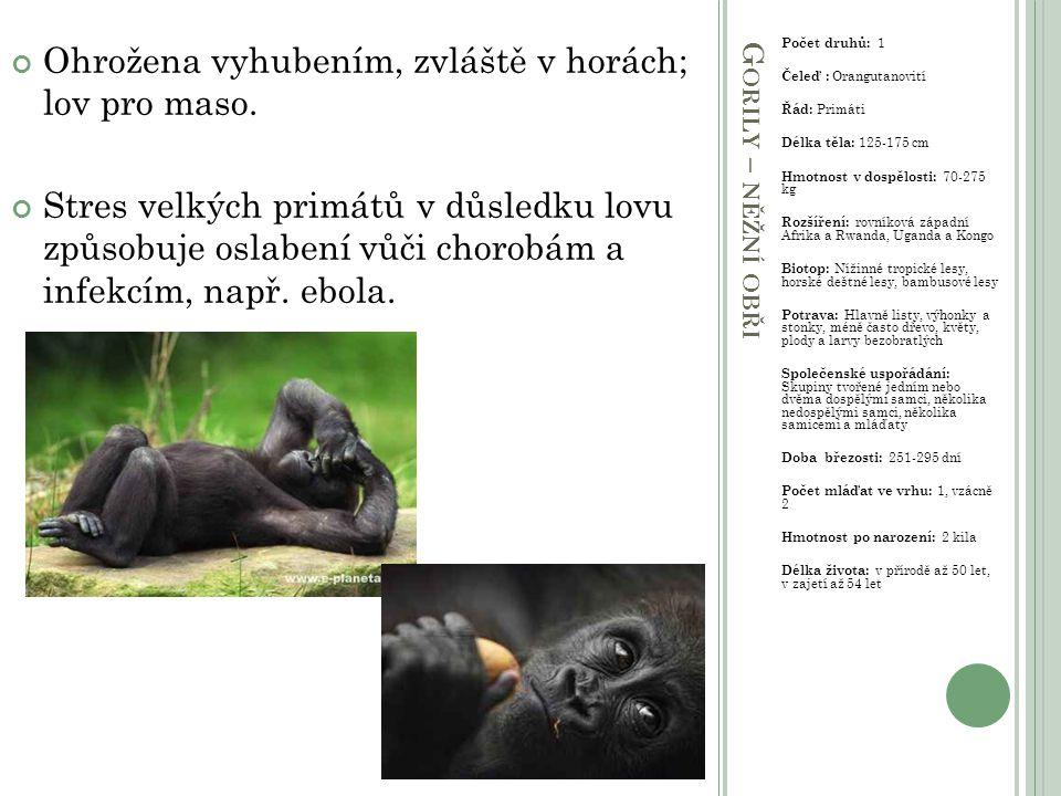 Š IMPANZI – SPOLEČENSKÁ ZVÍŘATA Počet druhů: 2 Čeleď : Orangutanovití Řád: Primáti Délka těla: 64-94 cm Hmotnost v dospělosti: 26-70 kg Rozšíření: Rovníková Afrika Biotop: Tropický deštný les, savana, horské lesy Potrava: Hlavně plody, listy, květy, semena, stonky, kůra, med, hmyz, ptačí vejce a maso Společenské uspořádání: Početné nepevné tlupy zvané společenstva sdílejí společné domovské území Doba březosti: 202-261 dní Počet mláďat ve vrhu: 1, vzácně 2 Hmotnost po narození: 1,9 kg Délka života: V přírodě až 60 let ZVÍŘE NEJBLÍŽE PODOBNÉ ČLOVĚKU.