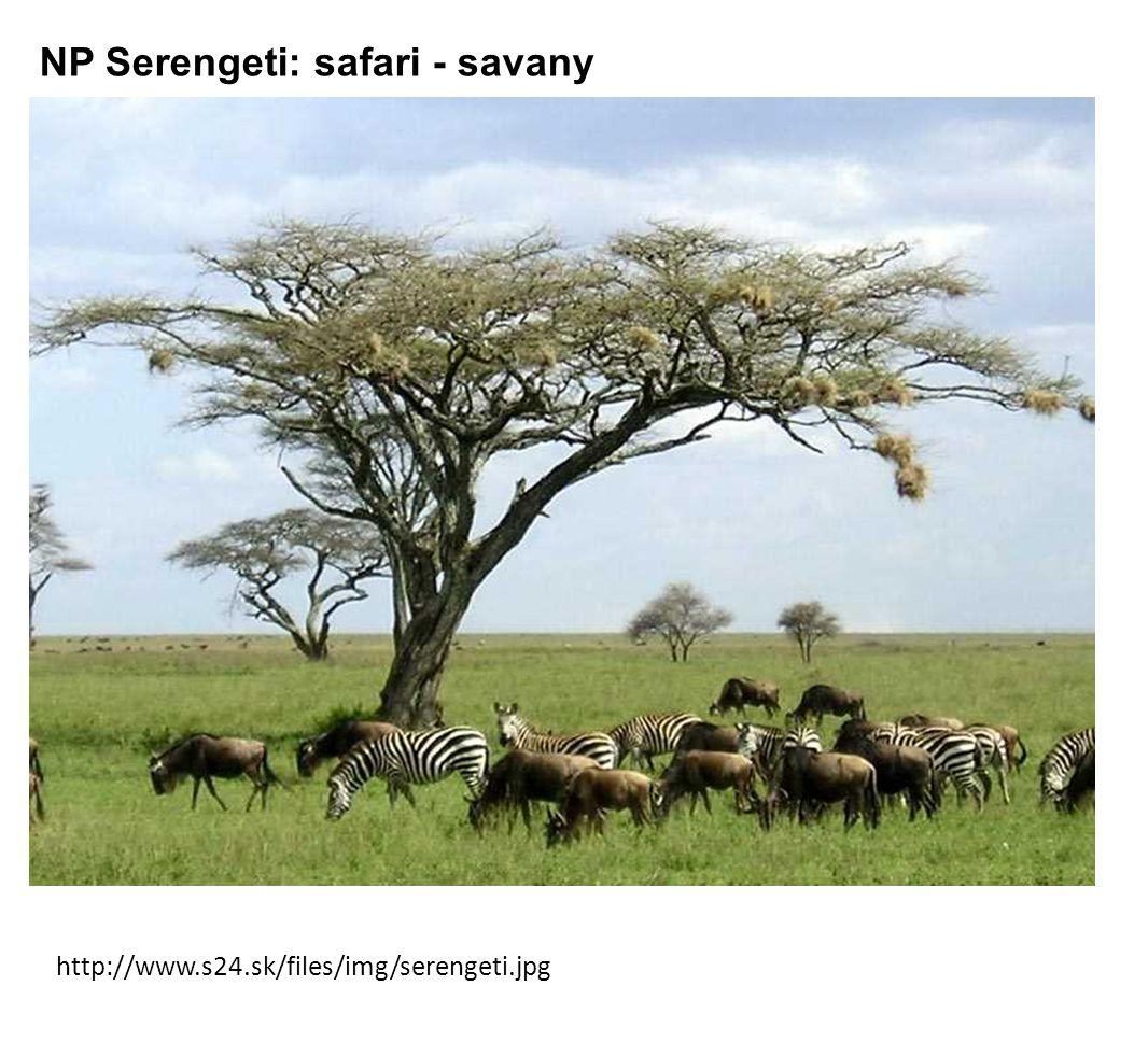 http://www.s24.sk/files/img/serengeti.jpg NP Serengeti: safari - savany