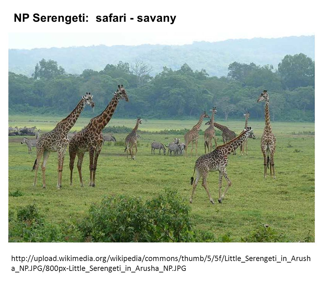 http://upload.wikimedia.org/wikipedia/commons/thumb/5/5f/Little_Serengeti_in_Arush a_NP.JPG/800px-Little_Serengeti_in_Arusha_NP.JPG NP Serengeti: safa