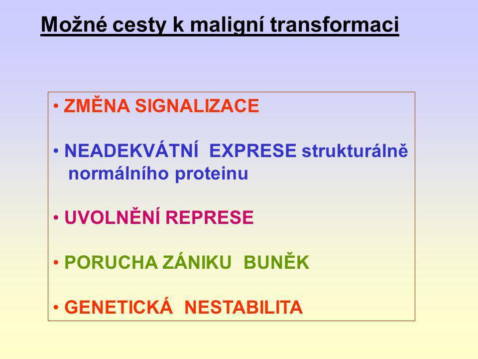 • Genová instabilita může predisponovat premaligní buňku k proliferaci maligních dceřinných buněk • Instabilita se může projevovat na makroúrovni: (změny v karyotypu) nebo mikroúrovnI (oprava DNA-sekvence)