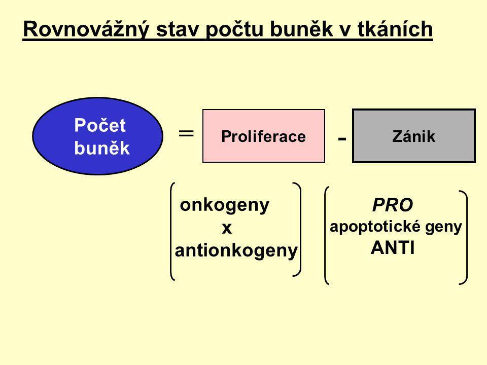 WNT Frizzled Dishvelled GSK3   APC   katenin  TCF   MYC  INK4B RB INK4A Cyk-CDK4 TGF  SMADs XX BAX APOPTÓZA ALT TERT E2Fs Buněčný cyklus CykE-CDK2 p53 MDM2 ARF Změny genové exprese MAPK MEK PP2ARSK Mobilizace zdrojů PTEN AKT PI3K TOR elF4E RTK Růstový faktor Cytokiny GPCR G-protein RAF RAS GRB2-SOS X X X X X X X X X X X X Replikační životnost DRÁHY KANCEROGENEZE