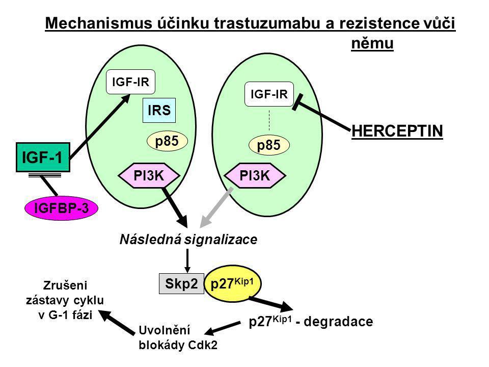 Signální dráha epidermálního růstového faktoru HER2/neu redukuje hladinu p27 Kip1 navozením jeho degradace ubikvitinací; to navozuje uvolnění Cdk2 (cyklin-dependentní kinasy2) a aktivaci cyklu buněčného dělení (=nádorová proliferace při nadměrné expresi) Trastuzumab (Herceptin) působením na receptor (HER2/neu-R) zvyšuje hladinu inhibitoru p27 Kip1 podporuje jeho asociaci s cyklindependentní kinasou CdK2, čímž inhibuje aktivitu této kinasy a způsobuje zástavu cyklu v G-1 fázi (a brání tak nádorové proliferaci).