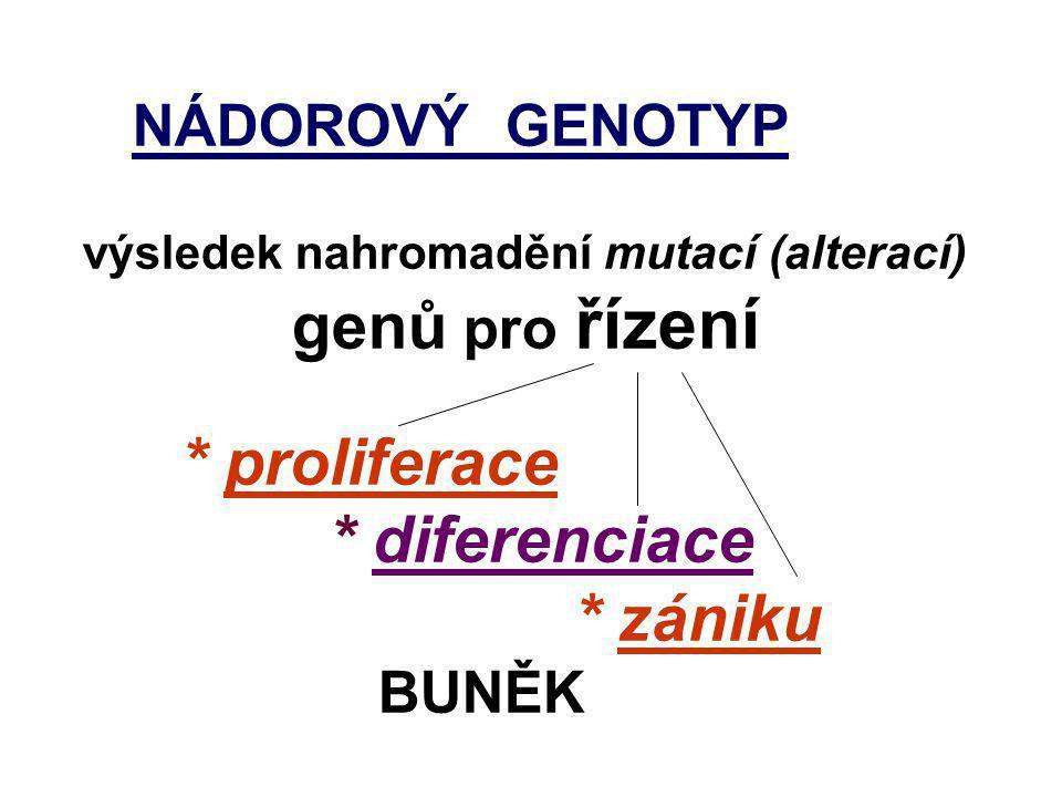 Genotoxický stres UV-záření Poškození DNA p53 ARF Apaf-1 Bax p53 MDM2 p21 CIP Bcl-2 c-Myc CyklinD1 CDK4 Cyklin E CDK2 E2F MDM2 pRb P P P UbUb Degradace p53 Apoptóza Kaskáda kaspas Progrese cyklu