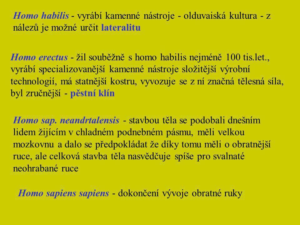 Homo habilis - vyrábí kamenné nástroje - olduvaiská kultura - z nálezů je možné určit lateralitu Homo erectus - žil souběžně s homo habilis nejméně 10