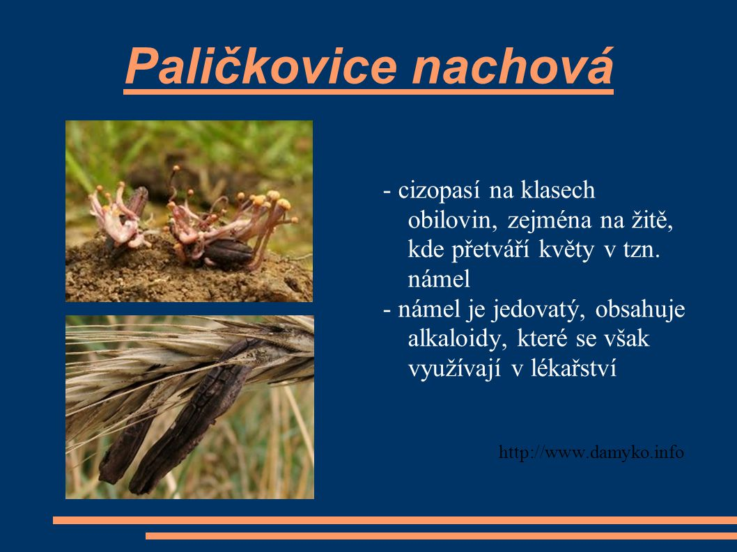 Paličkovice nachová - cizopasí na klasech obilovin, zejména na žitě, kde přetváří květy v tzn. námel - námel je jedovatý, obsahuje alkaloidy, které se