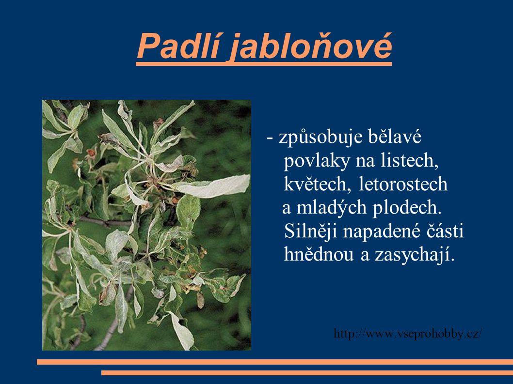 Padlí jabloňové - způsobuje bělavé povlaky na listech, květech, letorostech a mladých plodech. Silněji napadené části hnědnou a zasychají. http://www.