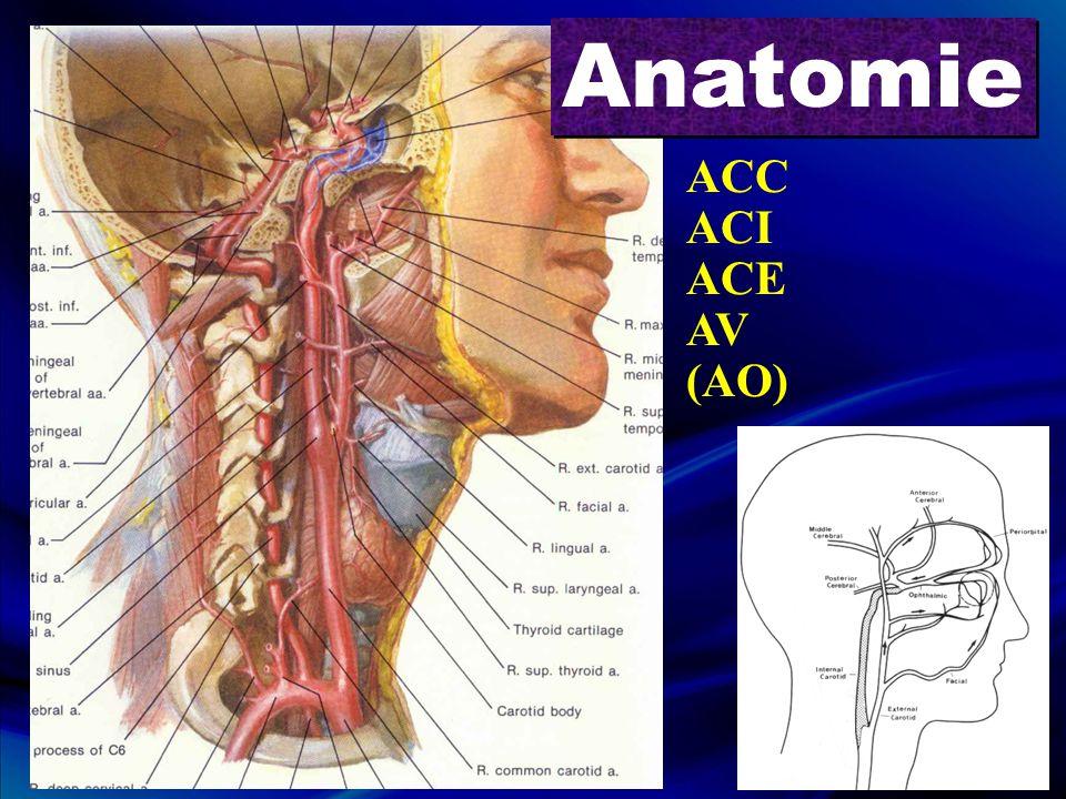 Anatomie ACC ACI ACE AV (AO)