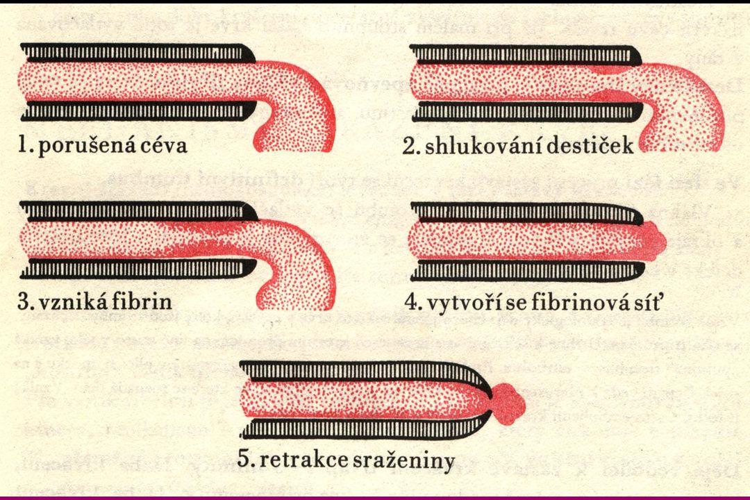Srážení krve zabraňuje větším krevním ztrátám.