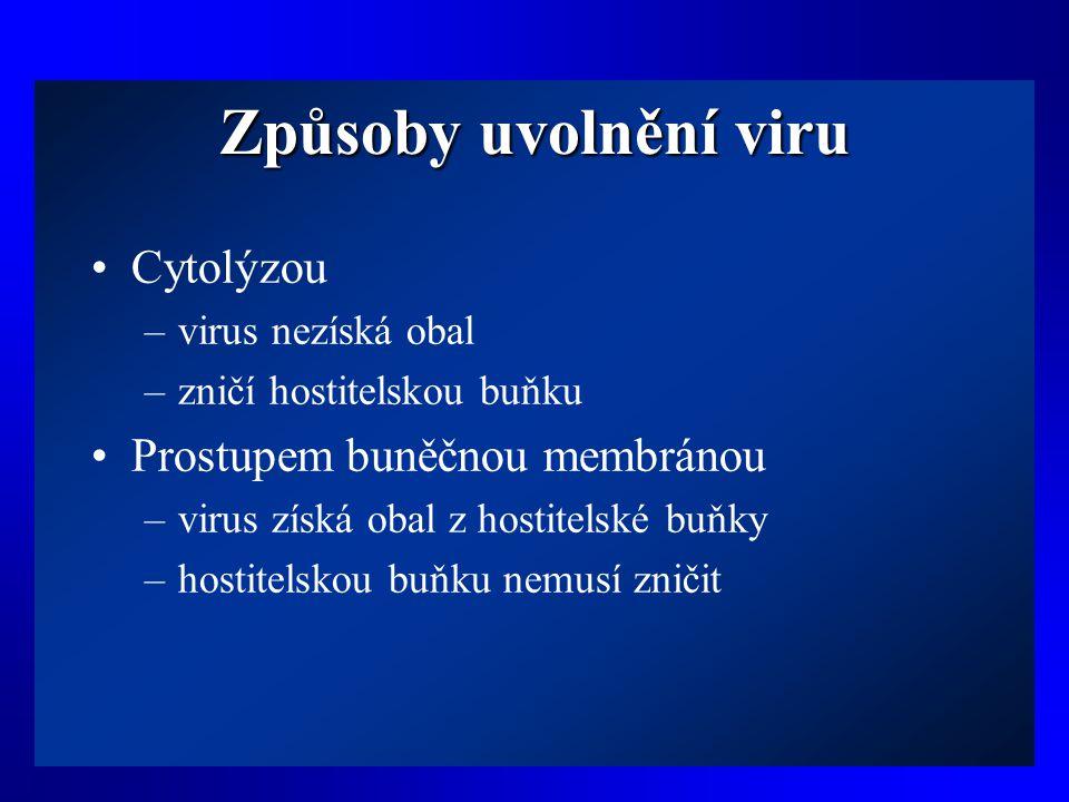 Způsoby uvolnění viru •Cytolýzou –virus nezíská obal –zničí hostitelskou buňku •Prostupem buněčnou membránou –virus získá obal z hostitelské buňky –ho