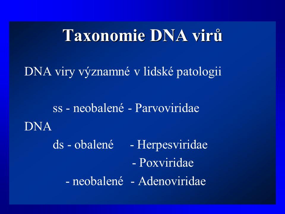 Taxonomie DNA virů DNA viry významné v lidské patologii ss - neobalené - Parvoviridae DNA ds - obalené - Herpesviridae - Poxviridae - neobalené - Aden