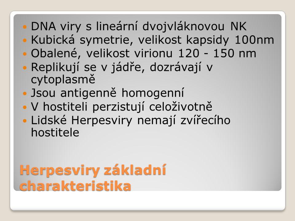 Herpesviry základní charakteristika  DNA viry s lineární dvojvláknovou NK  Kubická symetrie, velikost kapsidy 100nm  Obalené, velikost virionu 120