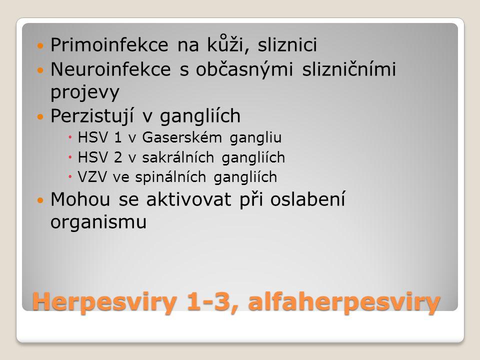 Herpesviry 1-3, alfaherpesviry  Primoinfekce na kůži, sliznici  Neuroinfekce s občasnými slizničními projevy  Perzistují v gangliích  HSV 1 v Gase