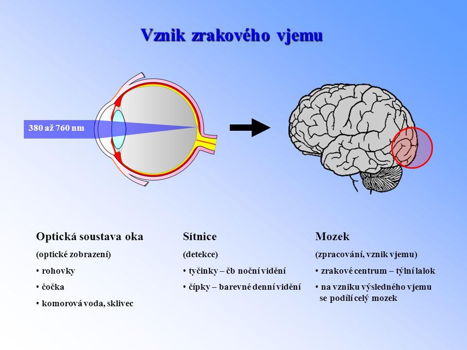 Vznik zrakového vjemu 380 až 760 nm Optická soustava oka (optické zobrazení) • rohovky • čočka • komorová voda, sklivec Sítnice (detekce) • tyčinky –