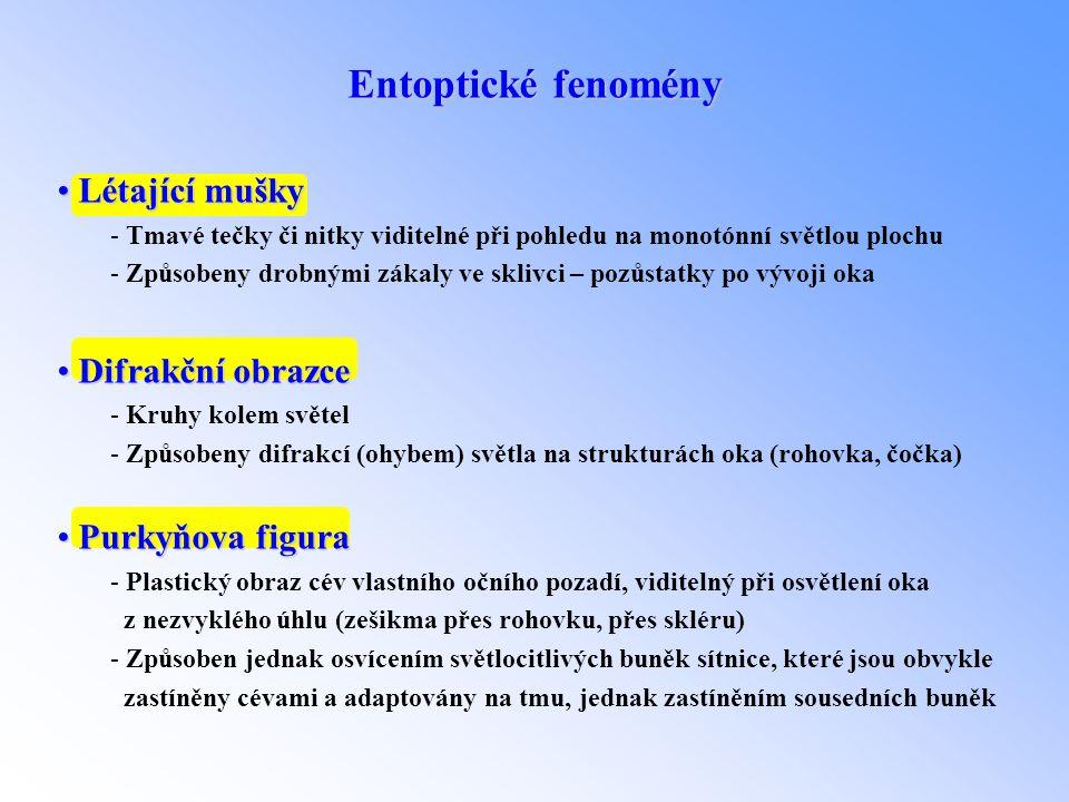 Entoptické fenomény • Létající mušky - Tmavé tečky či nitky viditelné při pohledu na monotónní světlou plochu - Způsobeny drobnými zákaly ve sklivci –