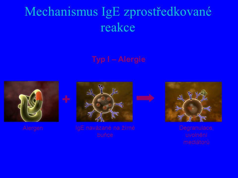 Mechanismus IgE zprostředkované reakce Typ I – Alergie Alergen IgE navázané na žírné buňce Degranulace, uvolnění mediátorů +
