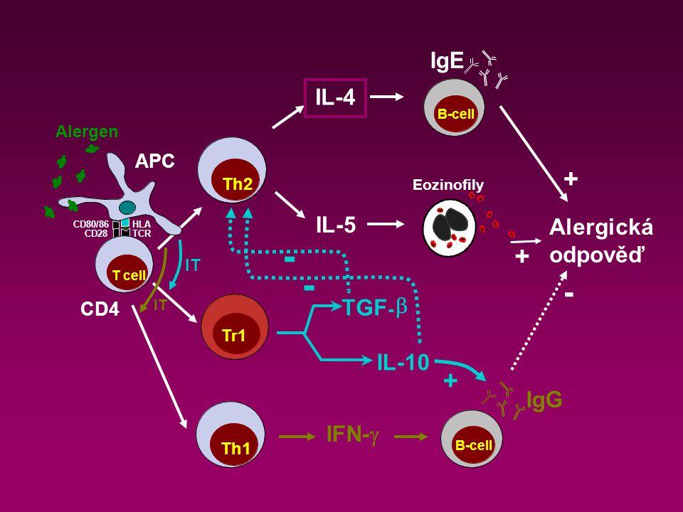 APC IgE IL-4 IL-5 Alergická odpověď Eozinofily Th2 B-cell + + Tr1 IL-10 TGF -  - - + IT Th1 IgG IFN-  B-cell IT - CD4 CD80/86 T cell Alergen TCR HLA CD28