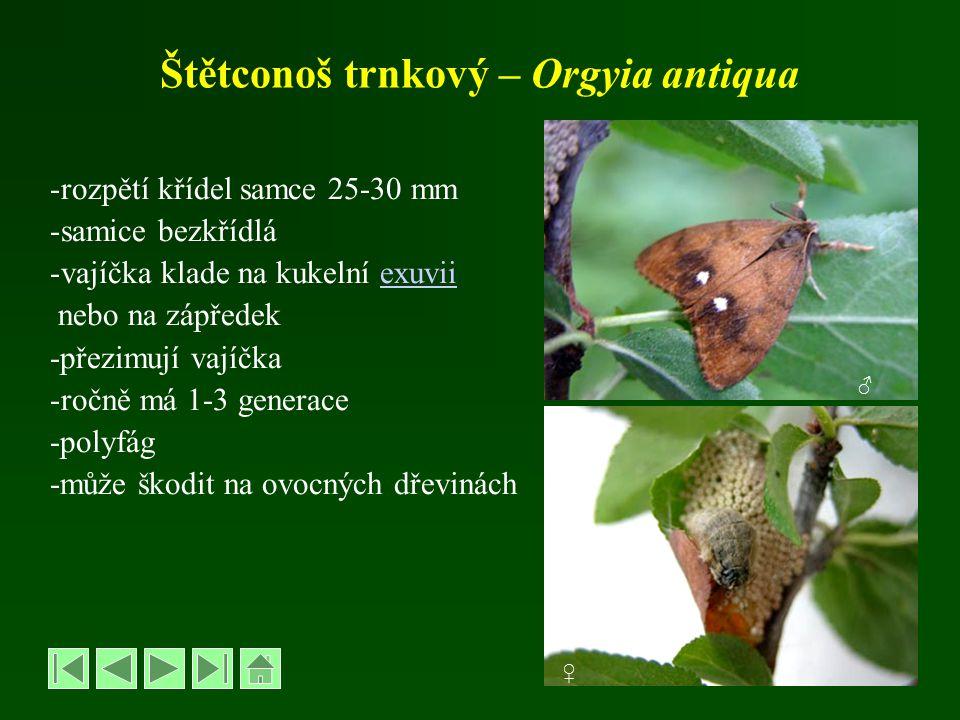 Štětconoš trnkový – Orgyia antiqua -rozpětí křídel samce 25-30 mm -samice bezkřídlá -vajíčka klade na kukelní exuviiexuvii nebo na zápředek -přezimují