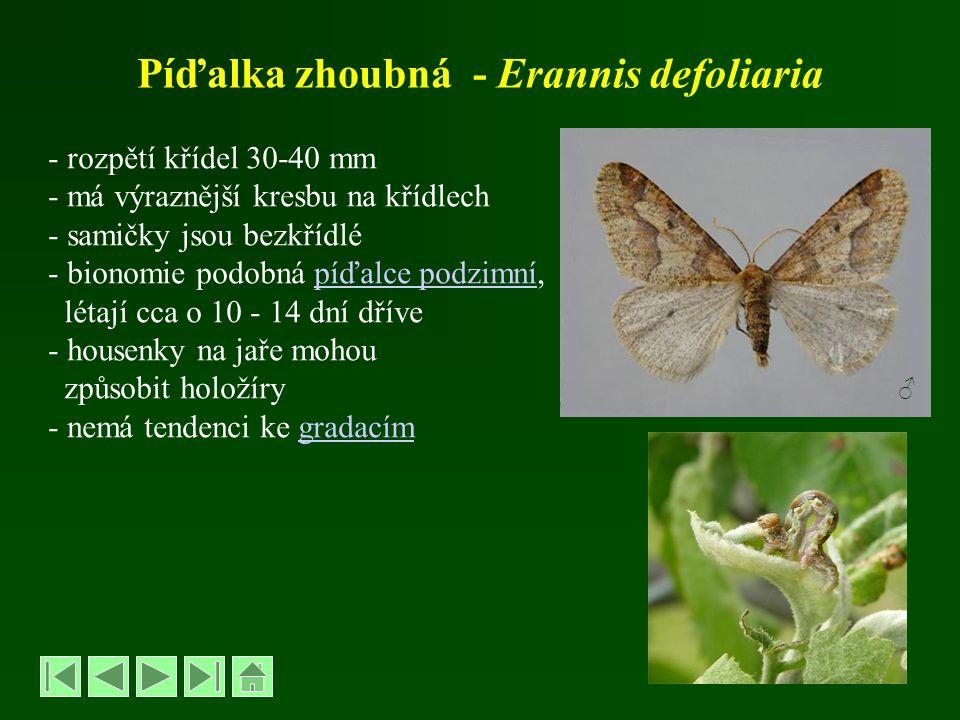 Píďalka zhoubná - Erannis defoliaria - rozpětí křídel 30-40 mm - má výraznější kresbu na křídlech - samičky jsou bezkřídlé - bionomie podobná píďalce