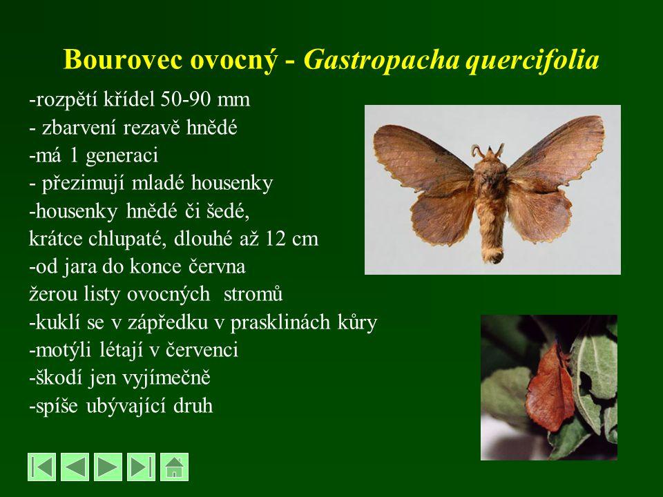 Bourovec ovocný - Gastropacha quercifolia -rozpětí křídel 50-90 mm - zbarvení rezavě hnědé -má 1 generaci - přezimují mladé housenky -housenky hnědé č