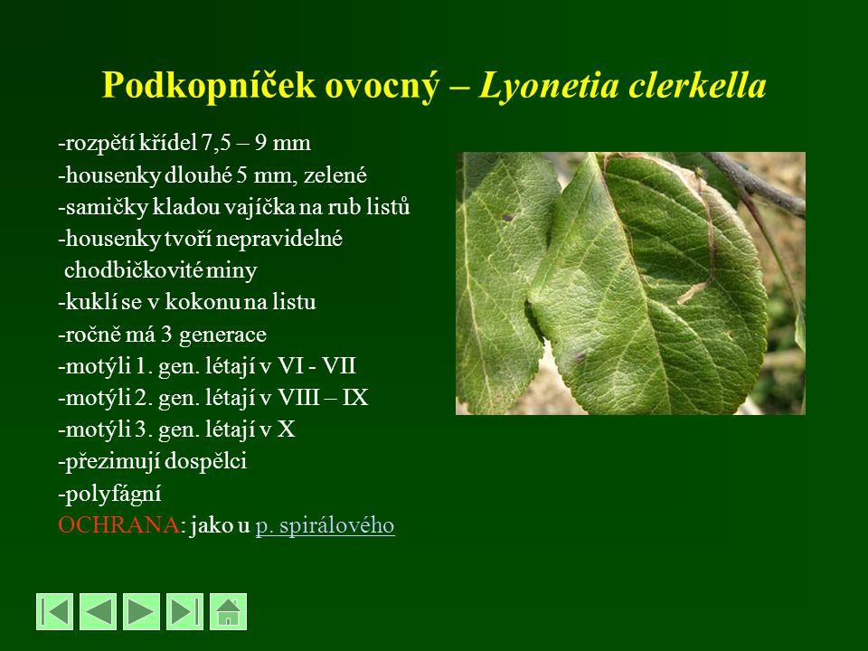Podkopníček ovocný – Lyonetia clerkella -rozpětí křídel 7,5 – 9 mm -housenky dlouhé 5 mm, zelené -samičky kladou vajíčka na rub listů -housenky tvoří