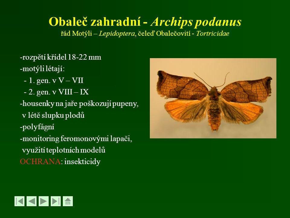 Obaleč zahradní - Archips podanus řád Motýli – Lepidoptera, čeleď Obalečovití - Tortricidae -rozpětí křídel 18-22 mm -motýli létají: - 1. gen. v V – V