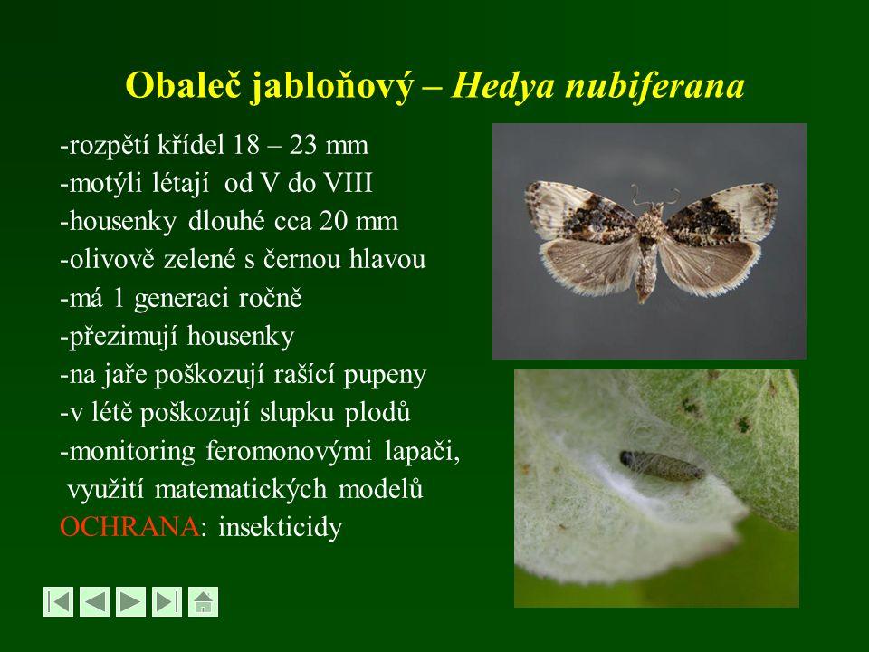 Obaleč jabloňový – Hedya nubiferana -rozpětí křídel 18 – 23 mm -motýli létají od V do VIII -housenky dlouhé cca 20 mm -olivově zelené s černou hlavou